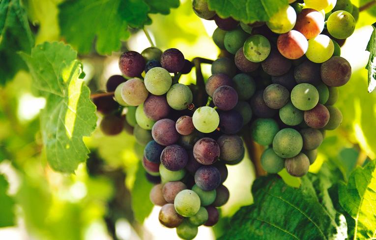 Výsledky súťaže Festival vín Rizling rýnsky