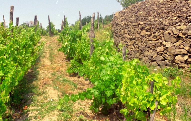 Ochutnajte jedinečné vína vo vinohradoch malokarpatských vinárov.
